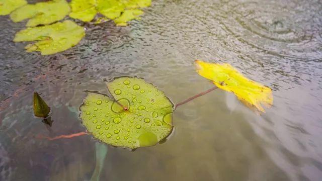 夏雨中的华侨城螺溪谷 清新脱俗的客家田园生活