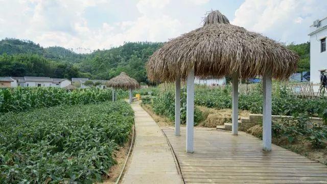 华侨城螺溪谷里面色彩斑斓的梦想田园
